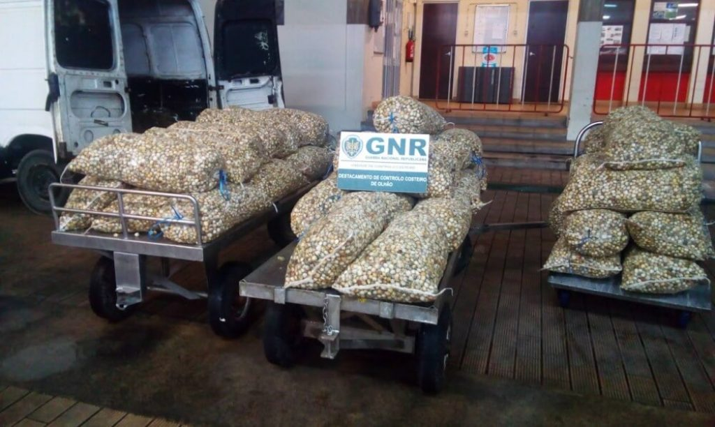 GNR seized 1.5 tons of undersized cockle in Faro - Diario diariOnline Região Sul