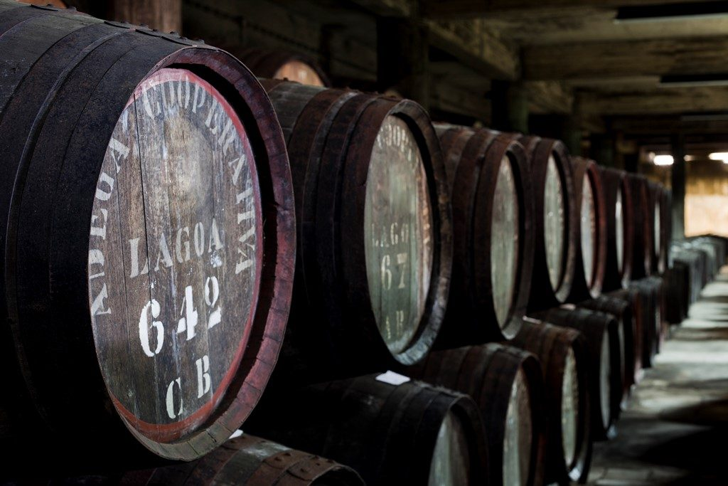 Lagoa Municipality receives bibliographic collection of old cooperative wineries - Jornal diariOnline Região Sul