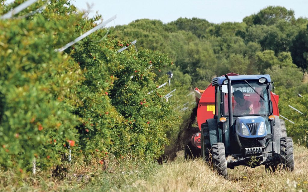 Government announces payment of 97 million euros to farmers - The Economic Journal