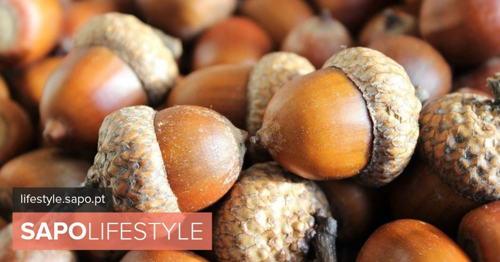 Acorn: The Cinderella of Dried Fruit is Becoming a Princess