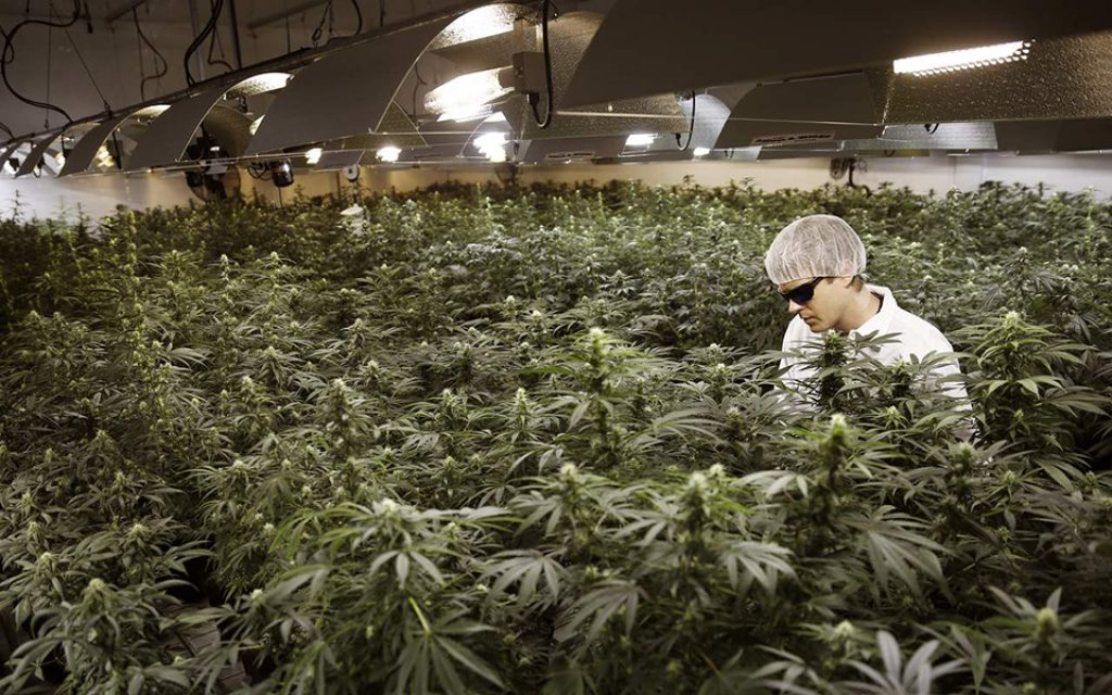 Investment of more than 160 million in medicinal cannabis in Portugal creates 750 jobs - Jornal Econômico