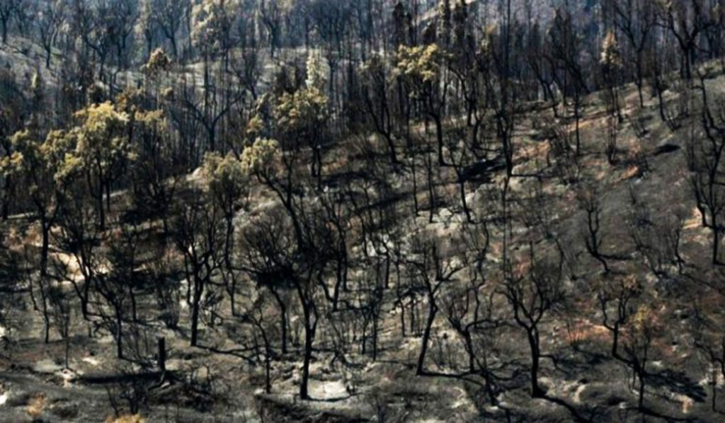 PJ concludes that there was no intentional human action in the fire of Monchique - Jornal diariOnline Região Sul