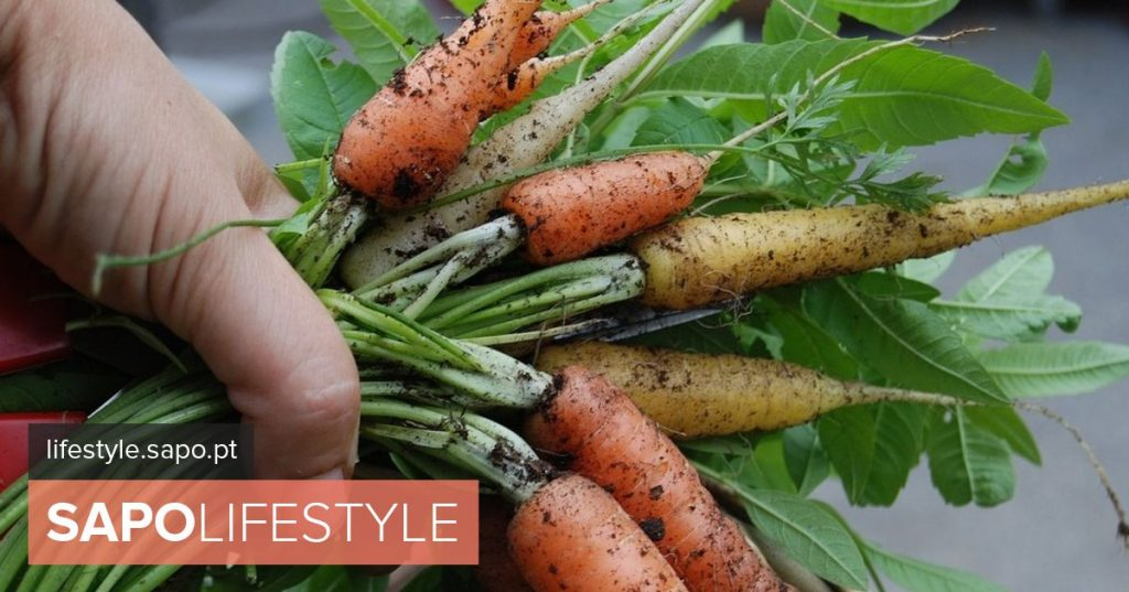 The best vegetables and aromatic to start a domestic organic farming project - Tips