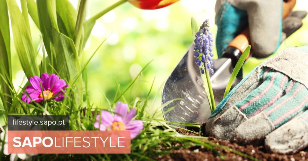 There is always plenty to do in the garden and in the vegetable garden and may be no exception. Essential Tasks - Decoration and Gardens