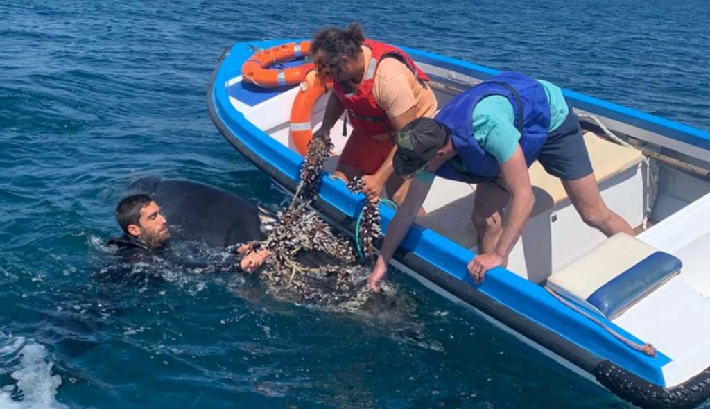Whale caught in fishing gear released by agents of the Maritime Police - Lagos - Diario diariOnline Região Sul