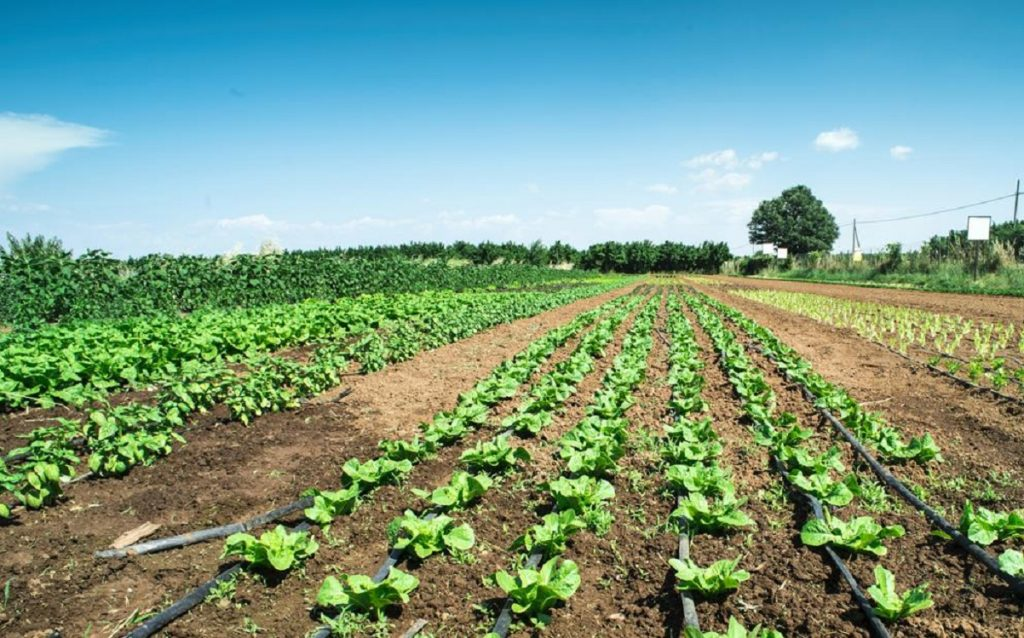 Number of farmers supported by PAC increased - Jornal diariOnline Região Sul