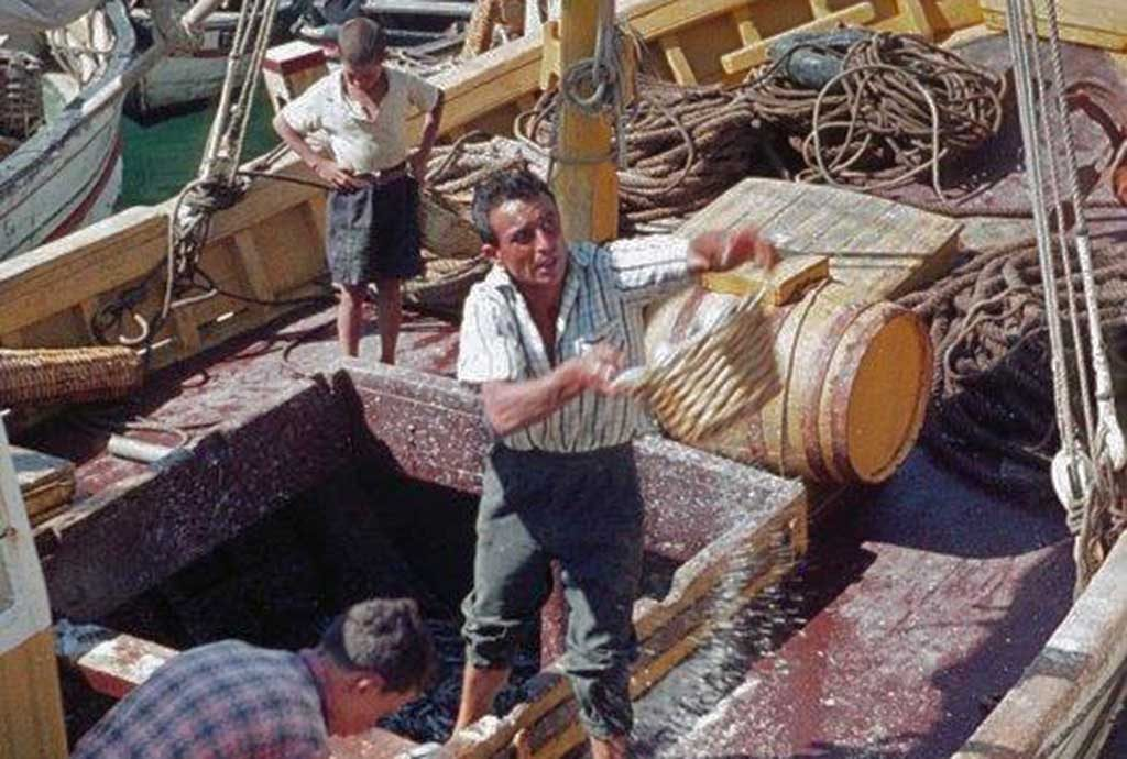Arrifana again unloads sardines in Portimão before the festival - Jornal diariOnline Southern Region