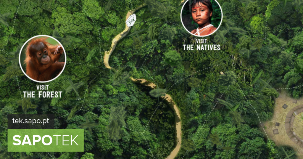 "There is a site that shows the Amazon without fires and offers a ""trip"" through the forest - Site of the day"