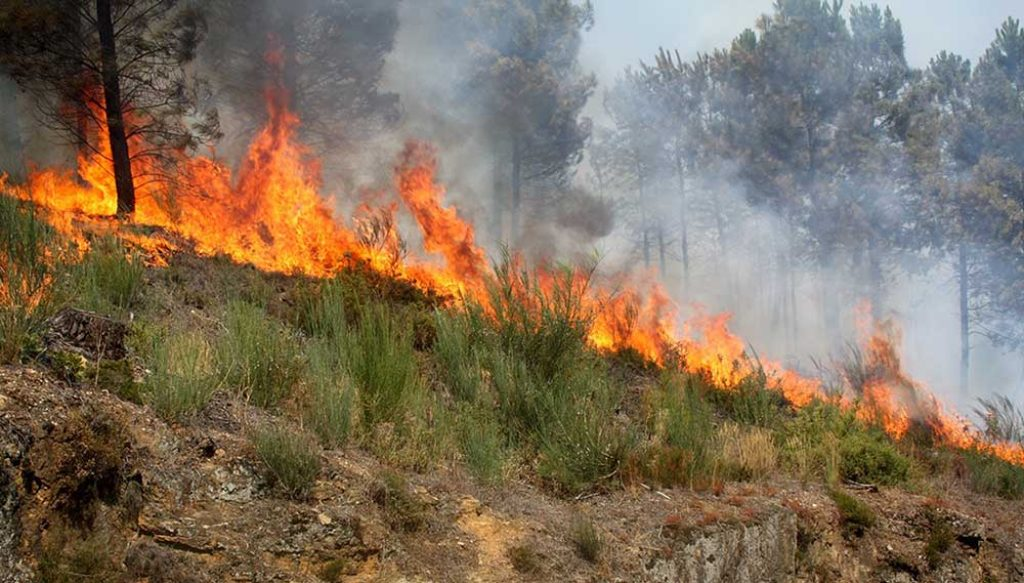 Odemira fire still active, from three fronts one is giving way - Jornal diariOnline Southern Region
