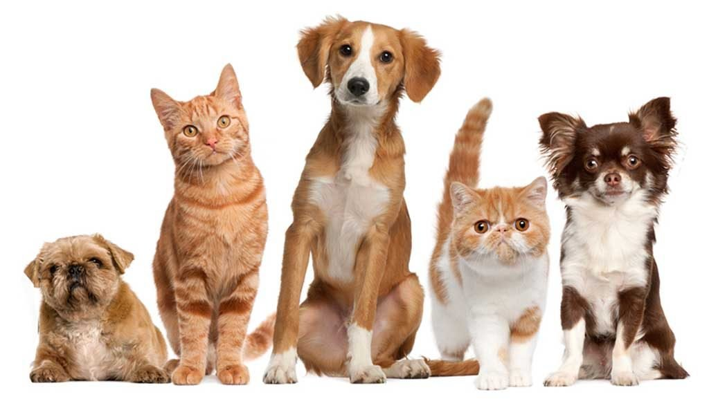 Registration of pets is required - Jornal diariOnline Southern Region