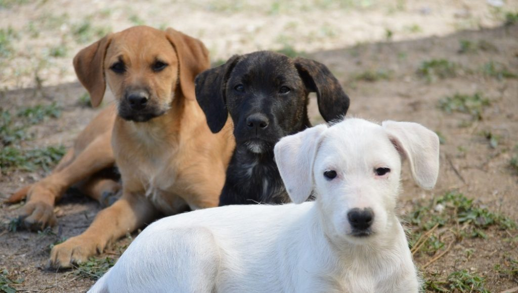 Faro Chamber launches tender for future animal collection center
