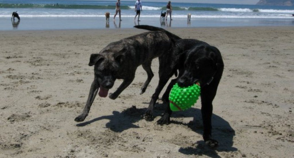 PAN / Algarve reinforces request for two pet-friendly beaches in the region
